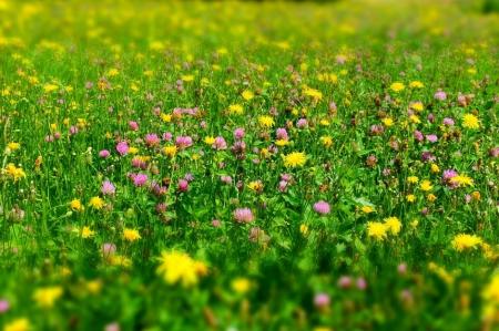 Aktywni Błękitni- Kwietne łąki