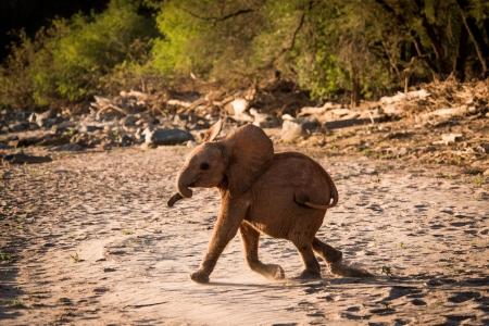 Przedszkolaki adoptowały prawdziwego słonia