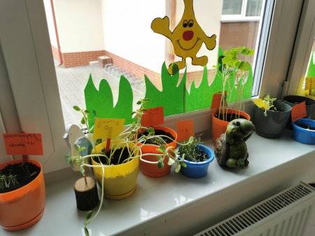 Od ziarenka do rośliny – zajęcia przyrodnicze w klasie IIIB